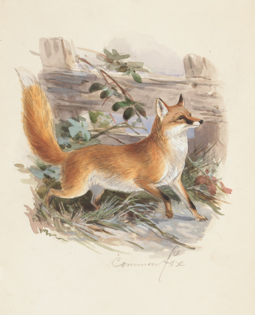 orange and white fox standing on boulder painting
