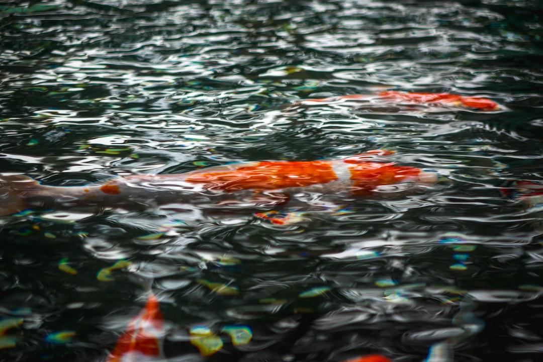 Proses Penetasan Telur Ikan Hias