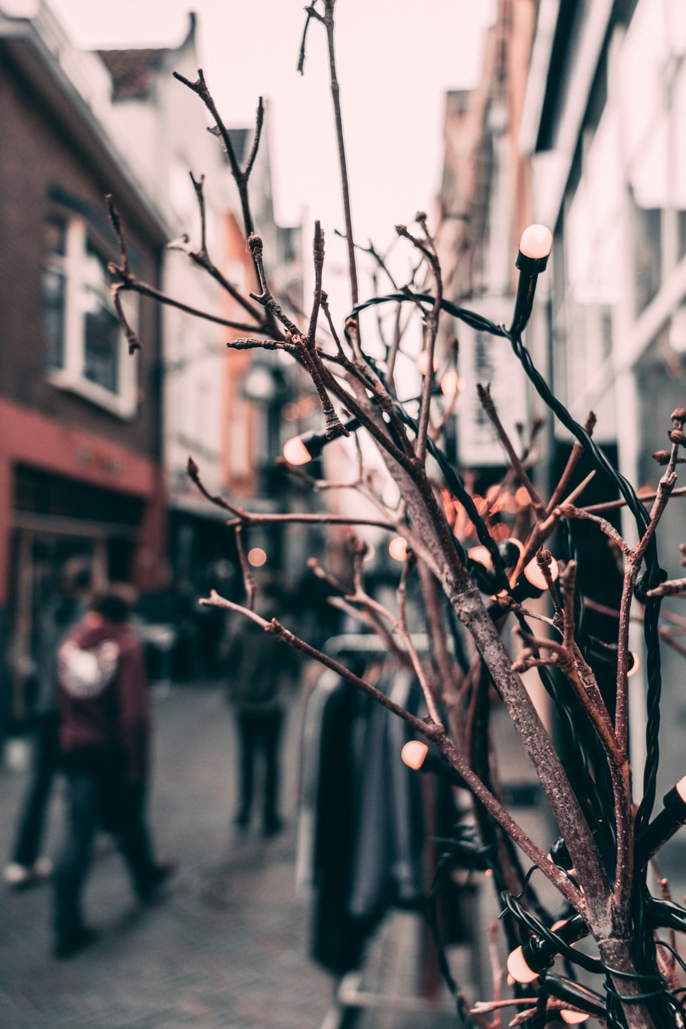 selective focus photography of brown tree branches