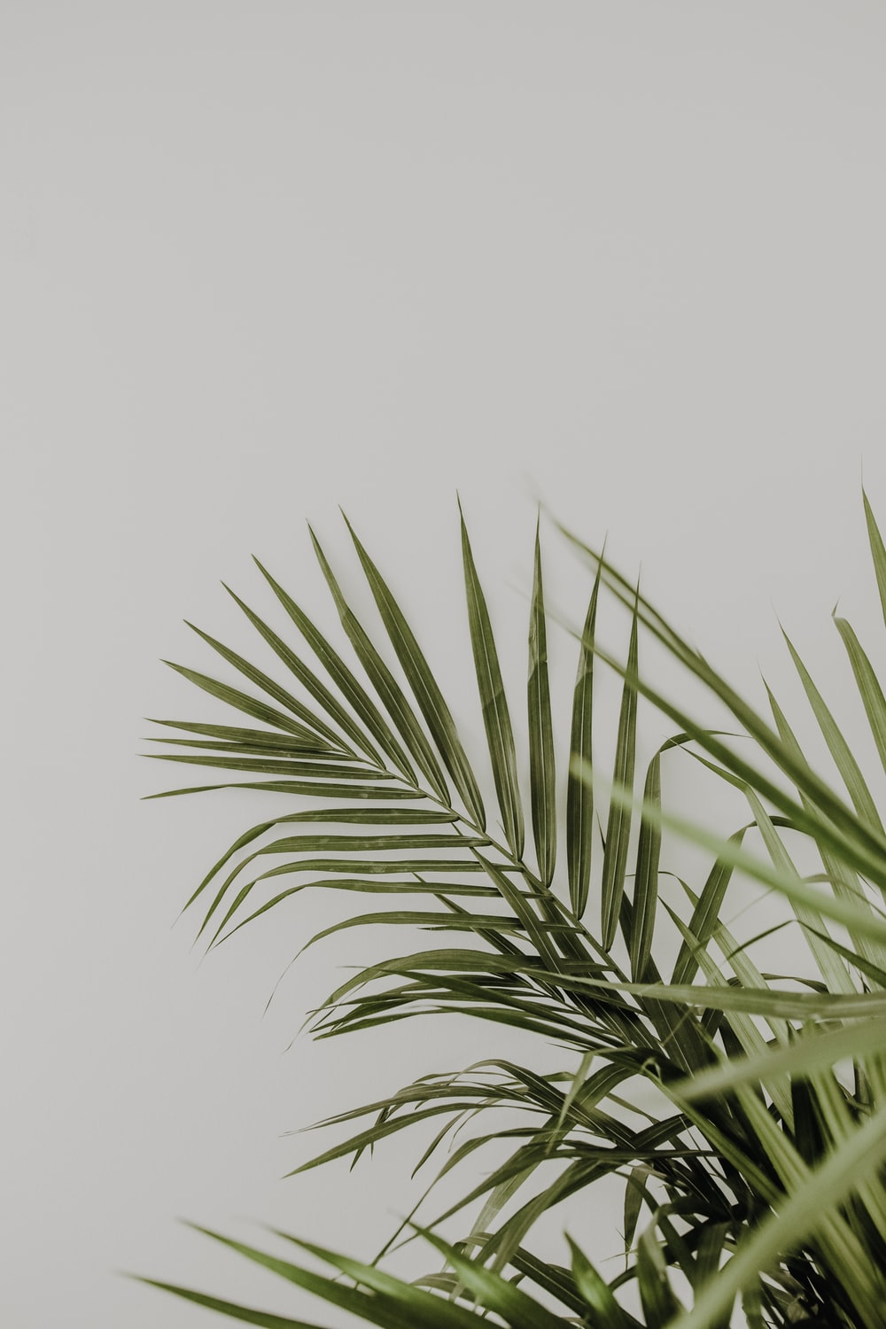 minimalist photography of green-leafed leaves in white background