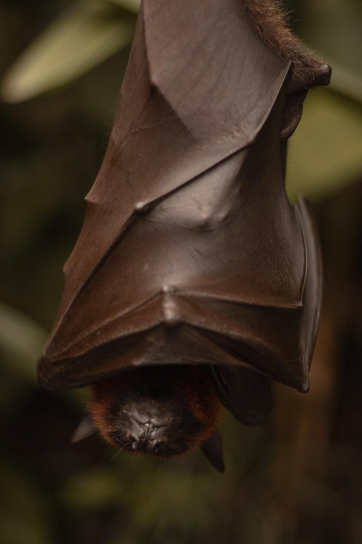 bat photograph