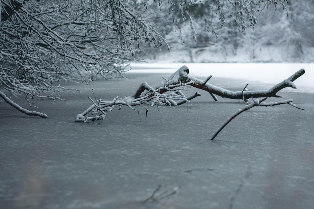 fallen tree branch during daytime