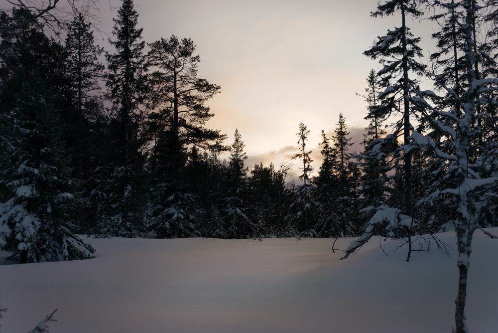 field and trees covered with snow