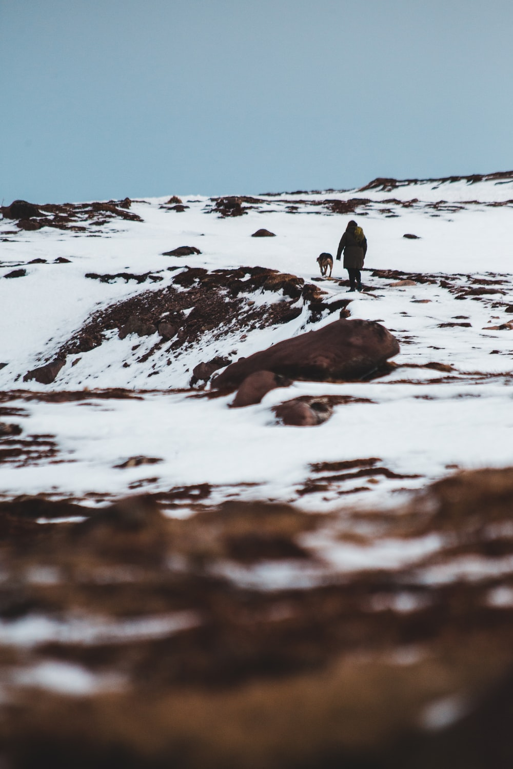 person along with animal on snow covered terrain at daytime