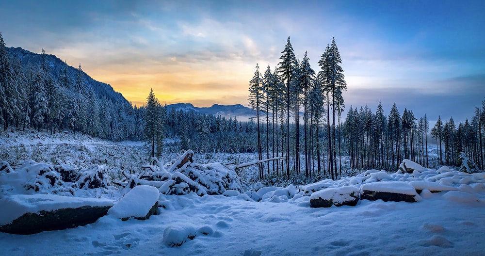 landscape photography of trees in a snow field