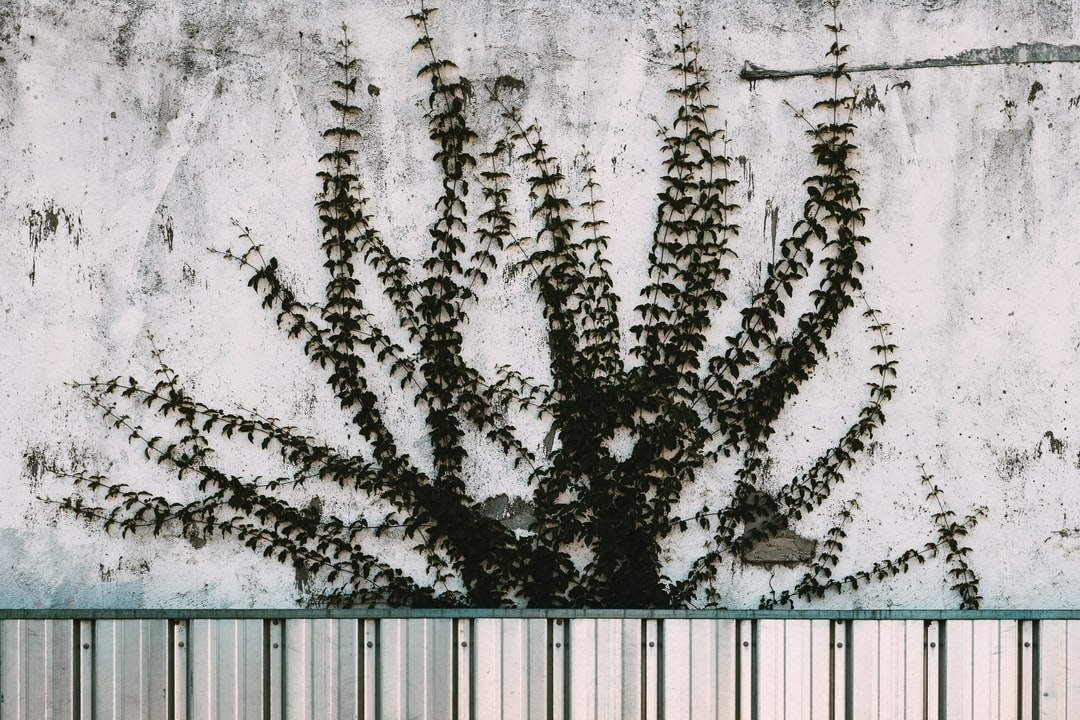 Plant Growing Up A Textured Wall - unsplash