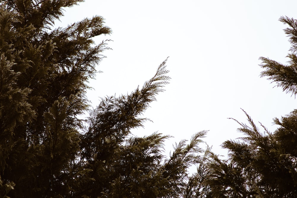 low-angle photography of green trees under a clear sky during daytime