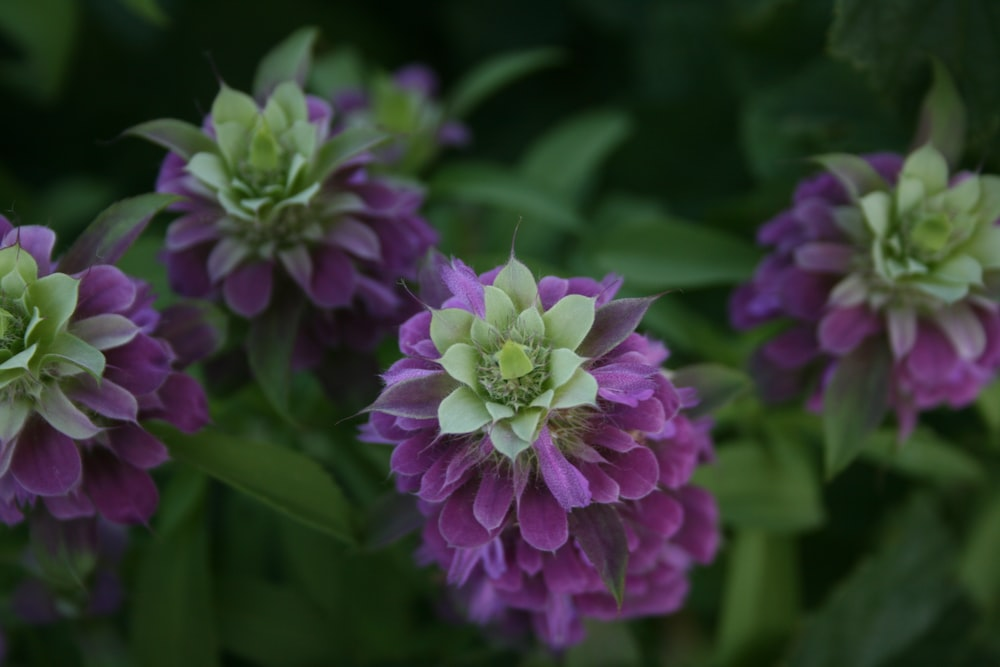 selective focus photography of green and purple-petaled flowers