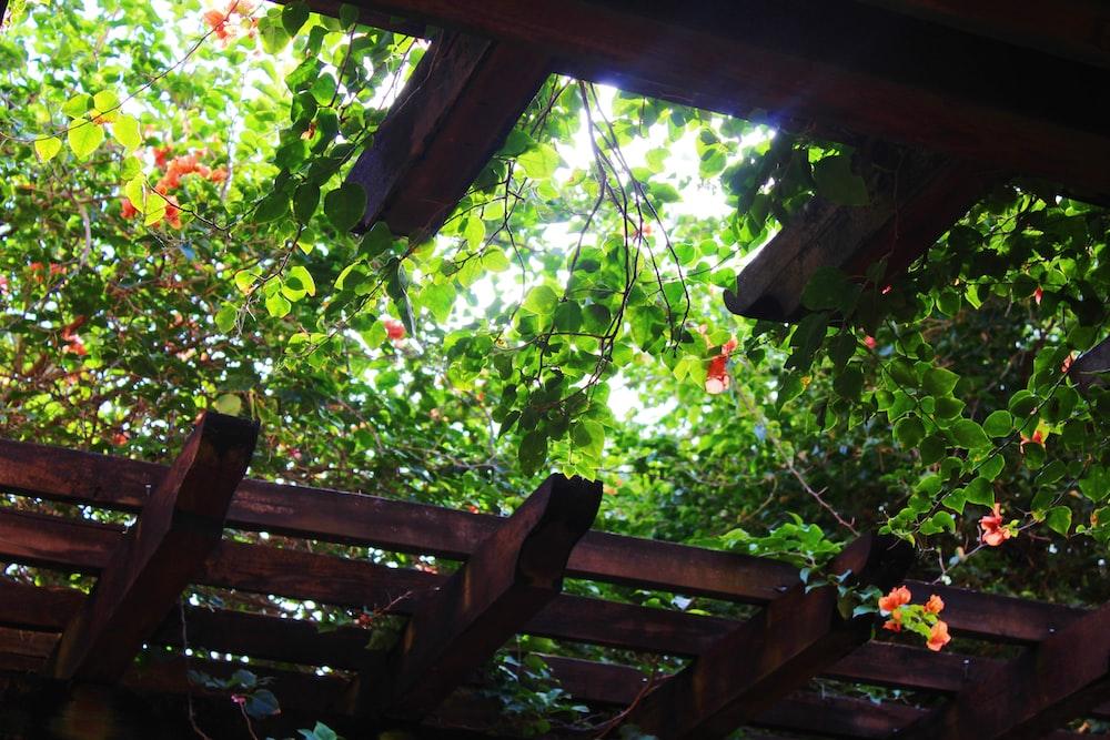 plants on pergola at daytime