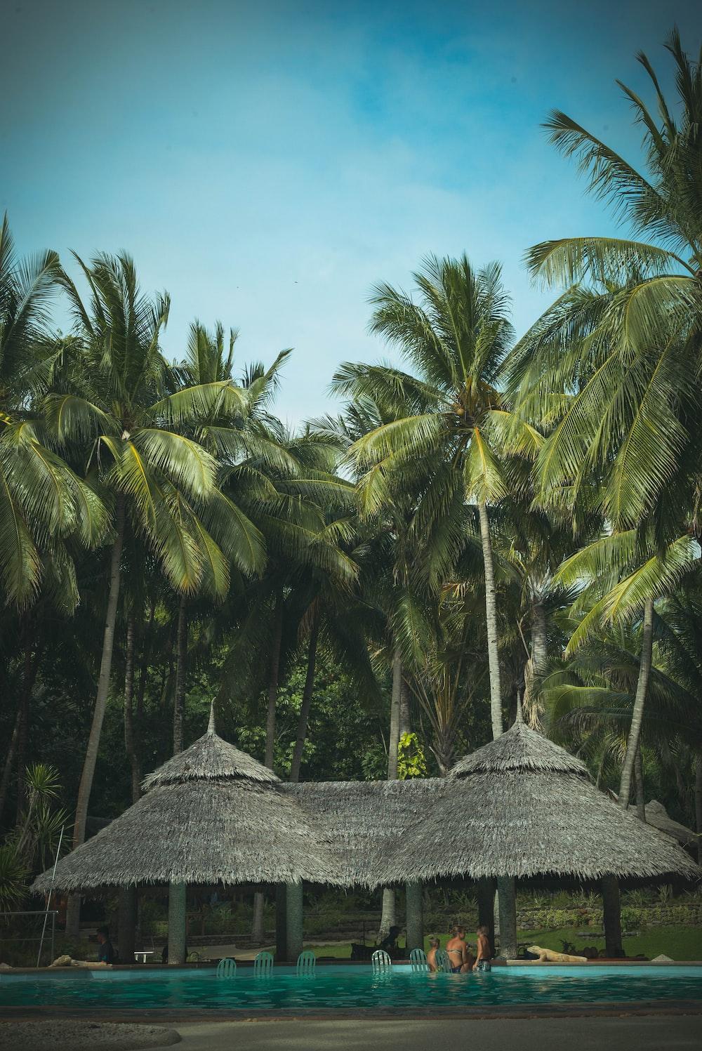 coconut trees near hut