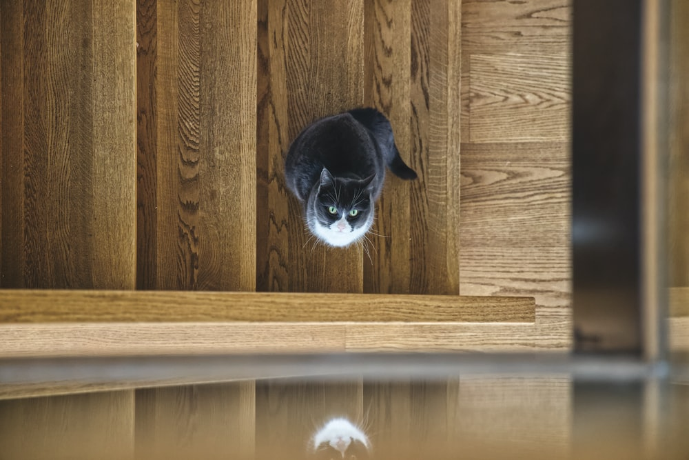 black cat on brown wooden stairs
