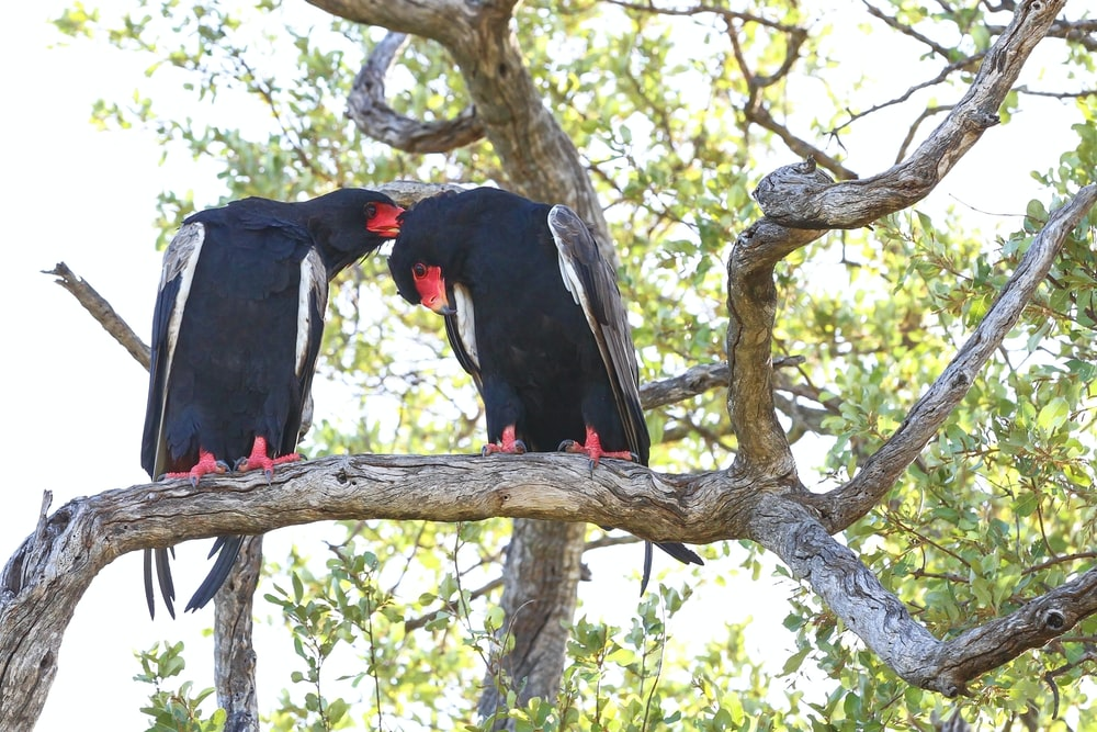 two black birds perched on the tree branch