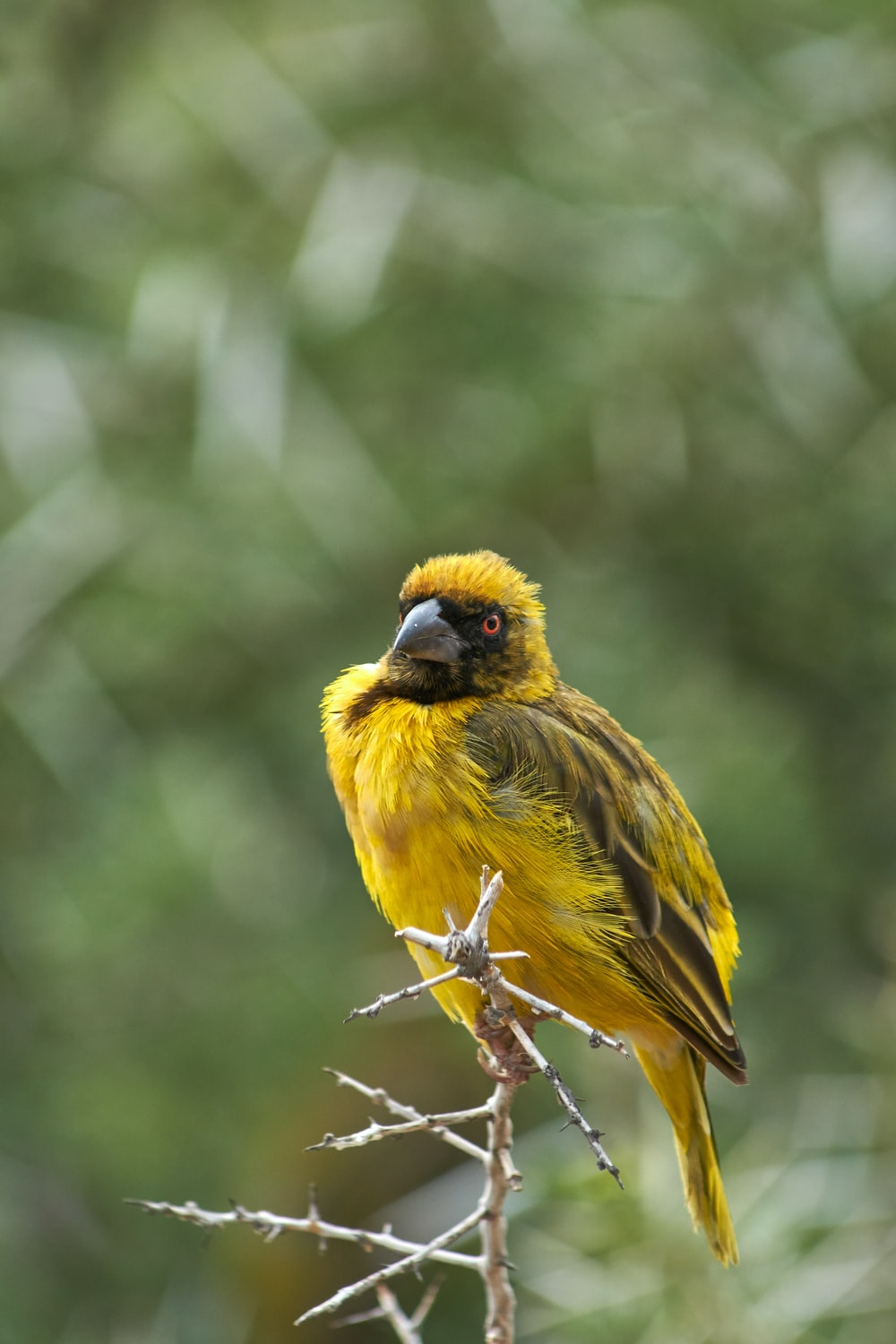 yellow and black bird photograph