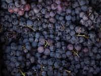 Grapes  grape stories