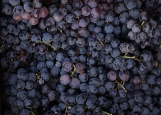 purple grapes lot