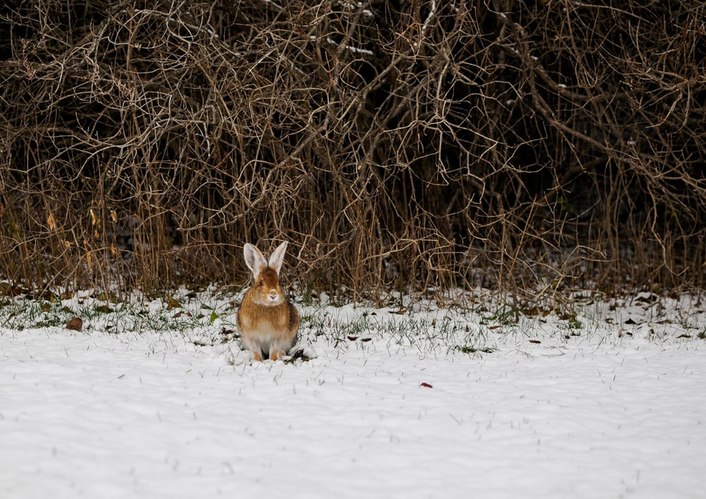 brown hare beside bushes