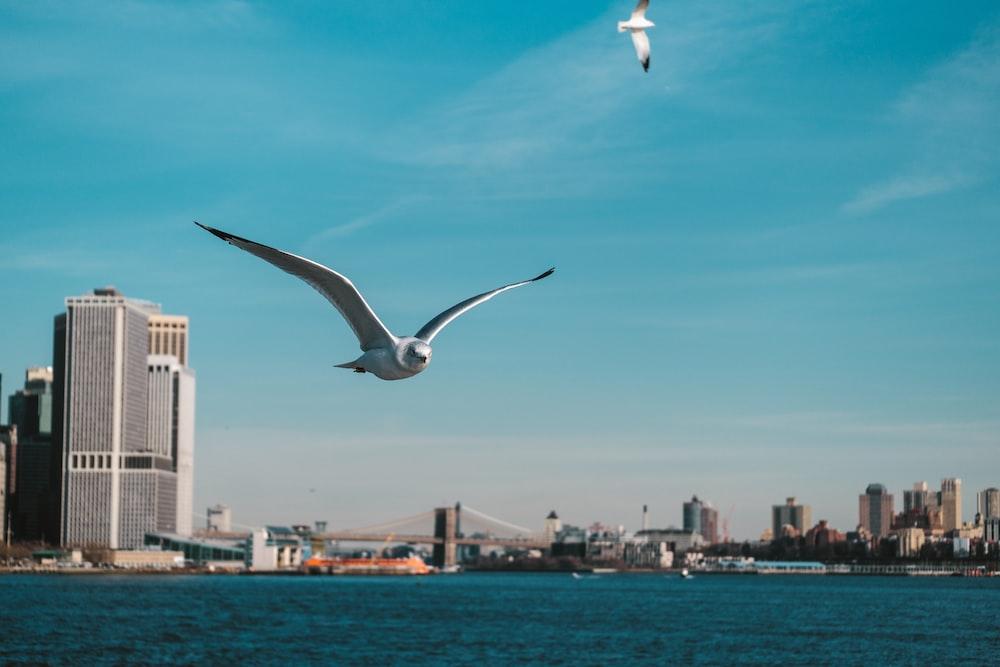 soaring bird over water