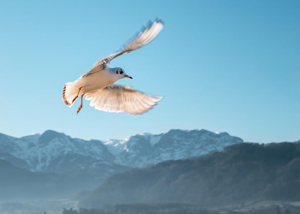 shallow focus photo of white bird flying