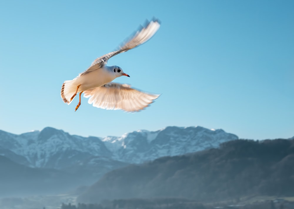 shallow focus photo of white bird flying