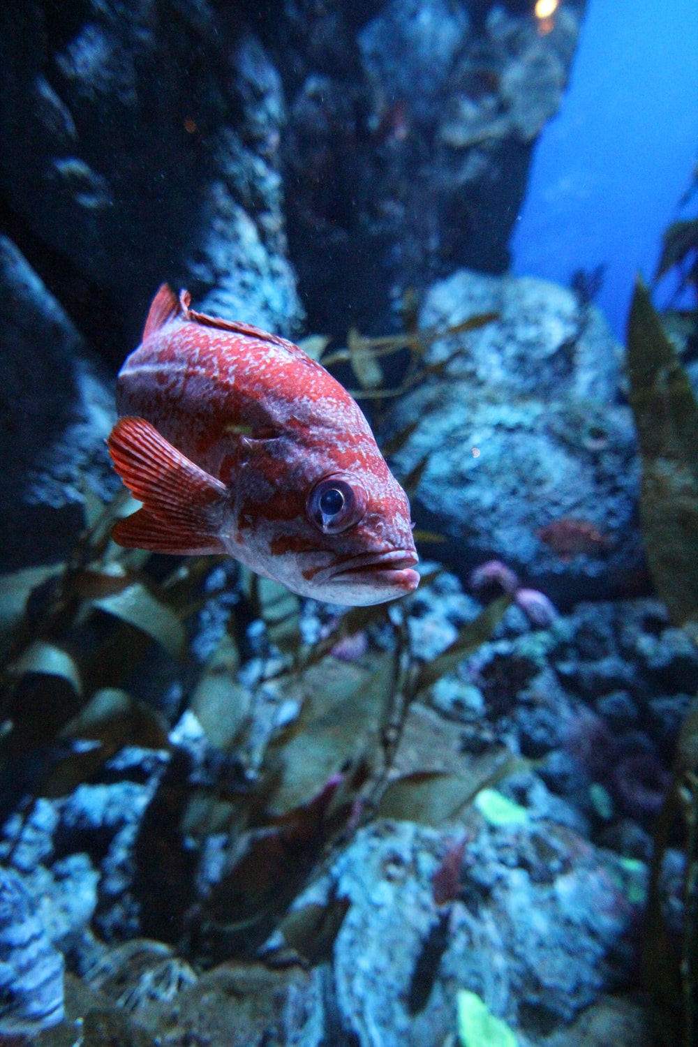 All About Stand For Fish Aquariums