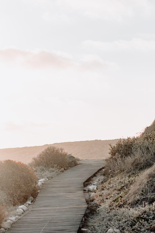gray wooden pathway under white sky