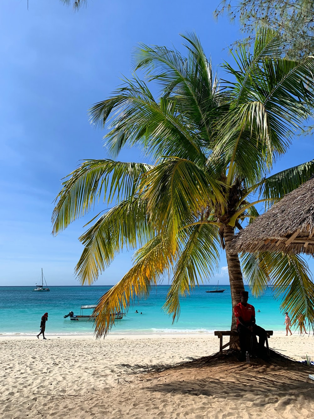 person sitting under coconut tree