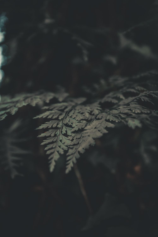 macro photography of green fern plant