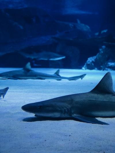 sharks underwater