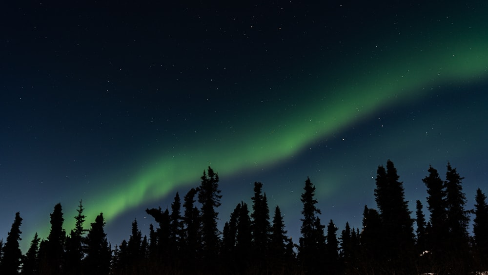 silhouette of trees viewing Aurora Borealis during night time