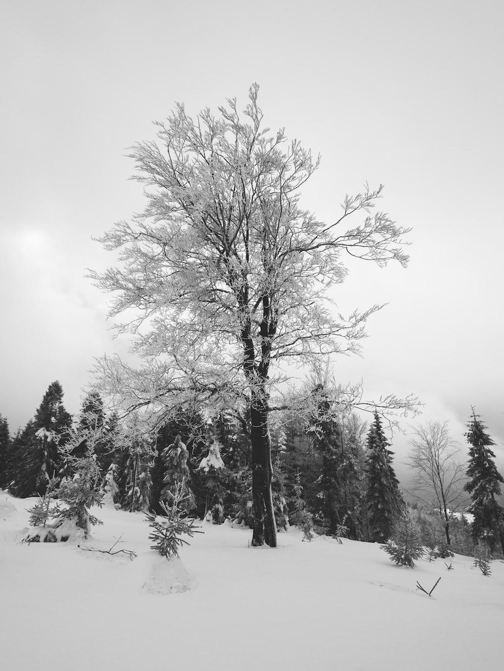bare tree on hi ll