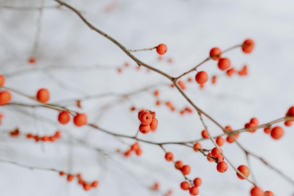 close up photography of orange cherries
