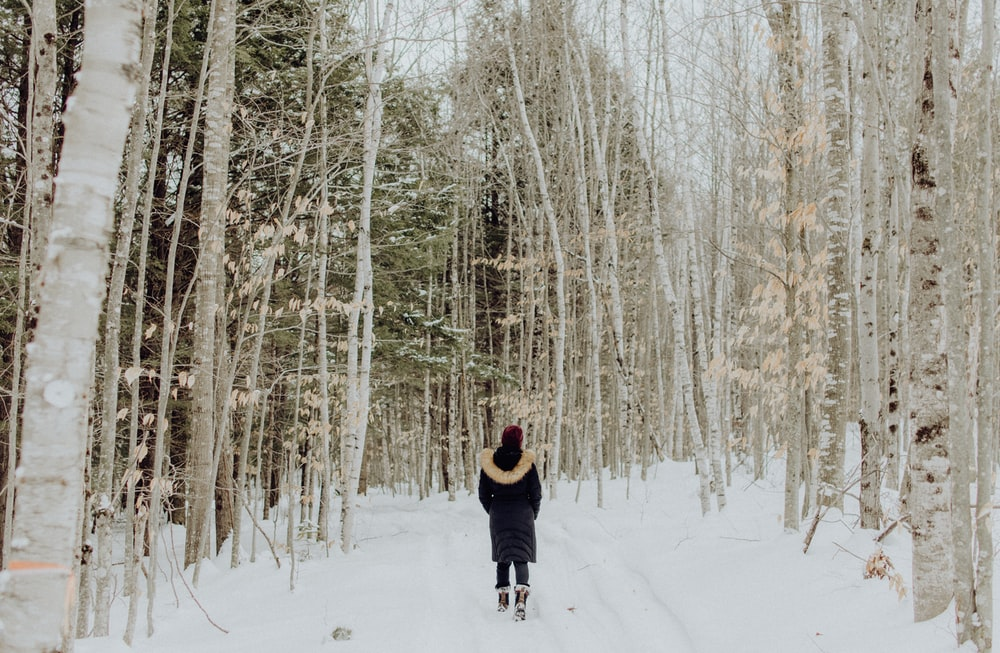 woman standing between trees on snow during daytime
