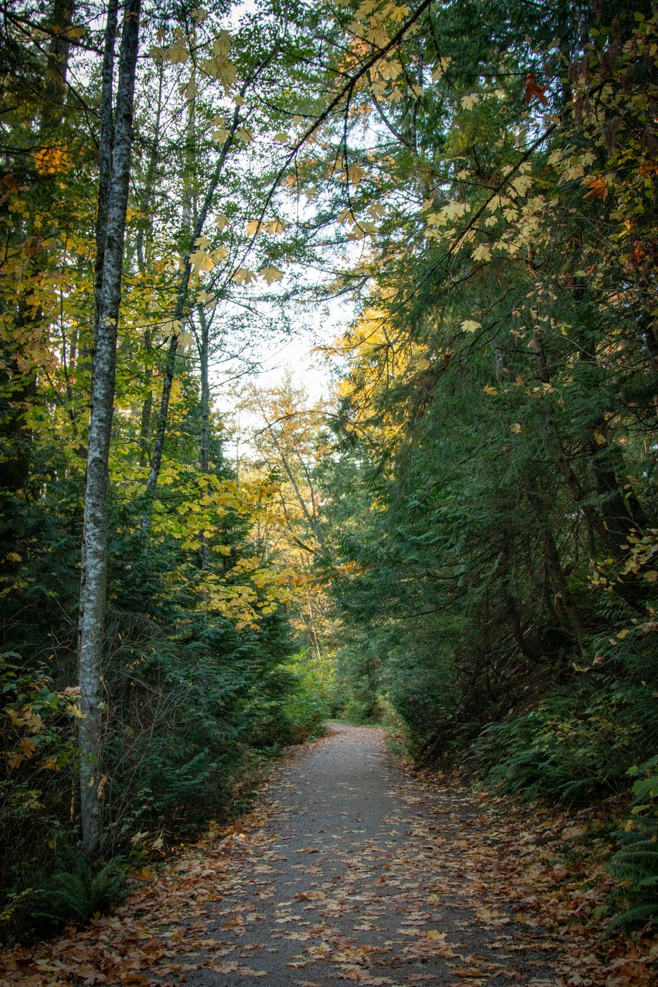 path through the forest in Bellingham, WA