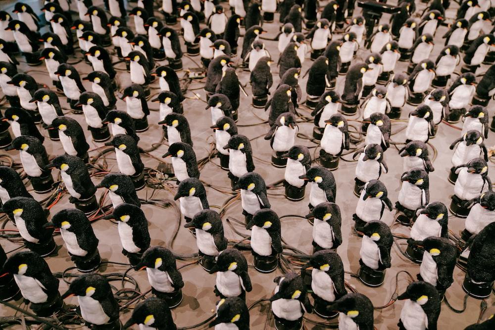 penguins on snowy field