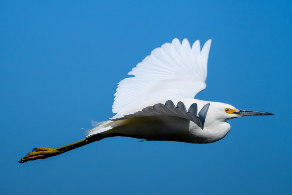 shallow focus photo of white and black bird flying during daytime