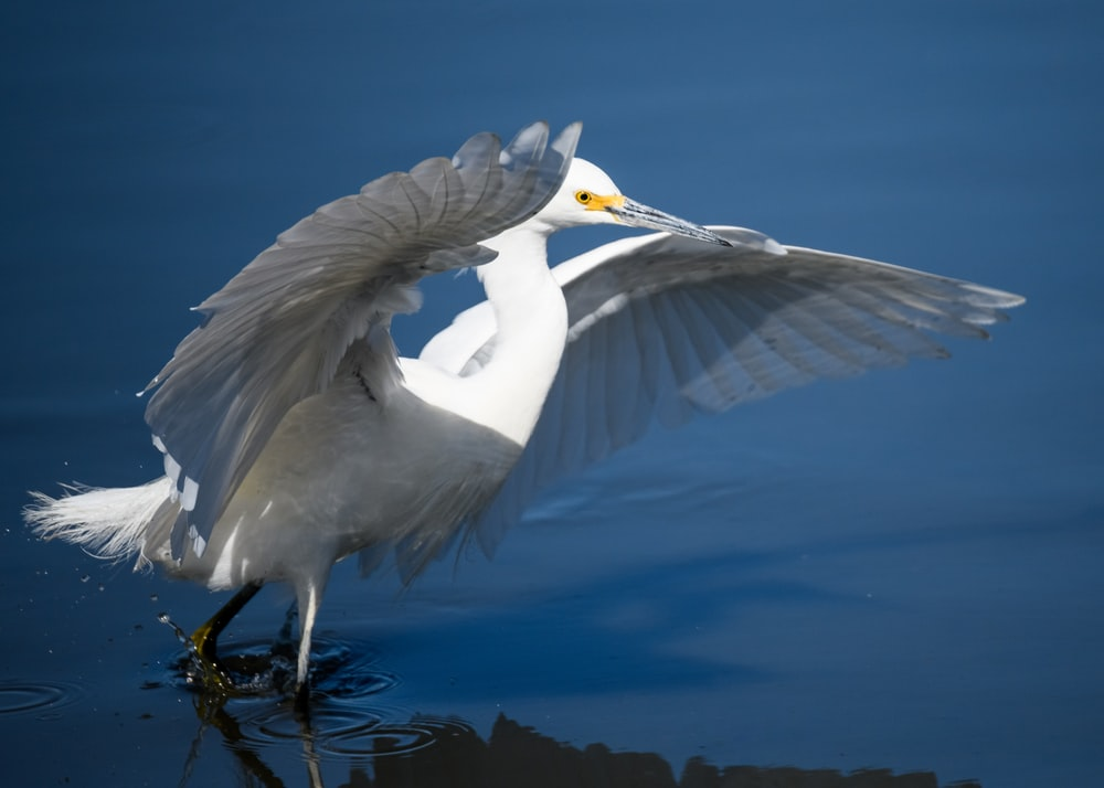 white bird flapping its wings