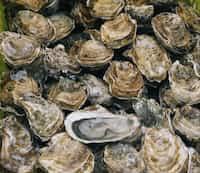 eat oysters zinc stories