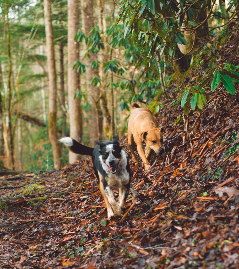 two dog walking on withered leaves beside tree