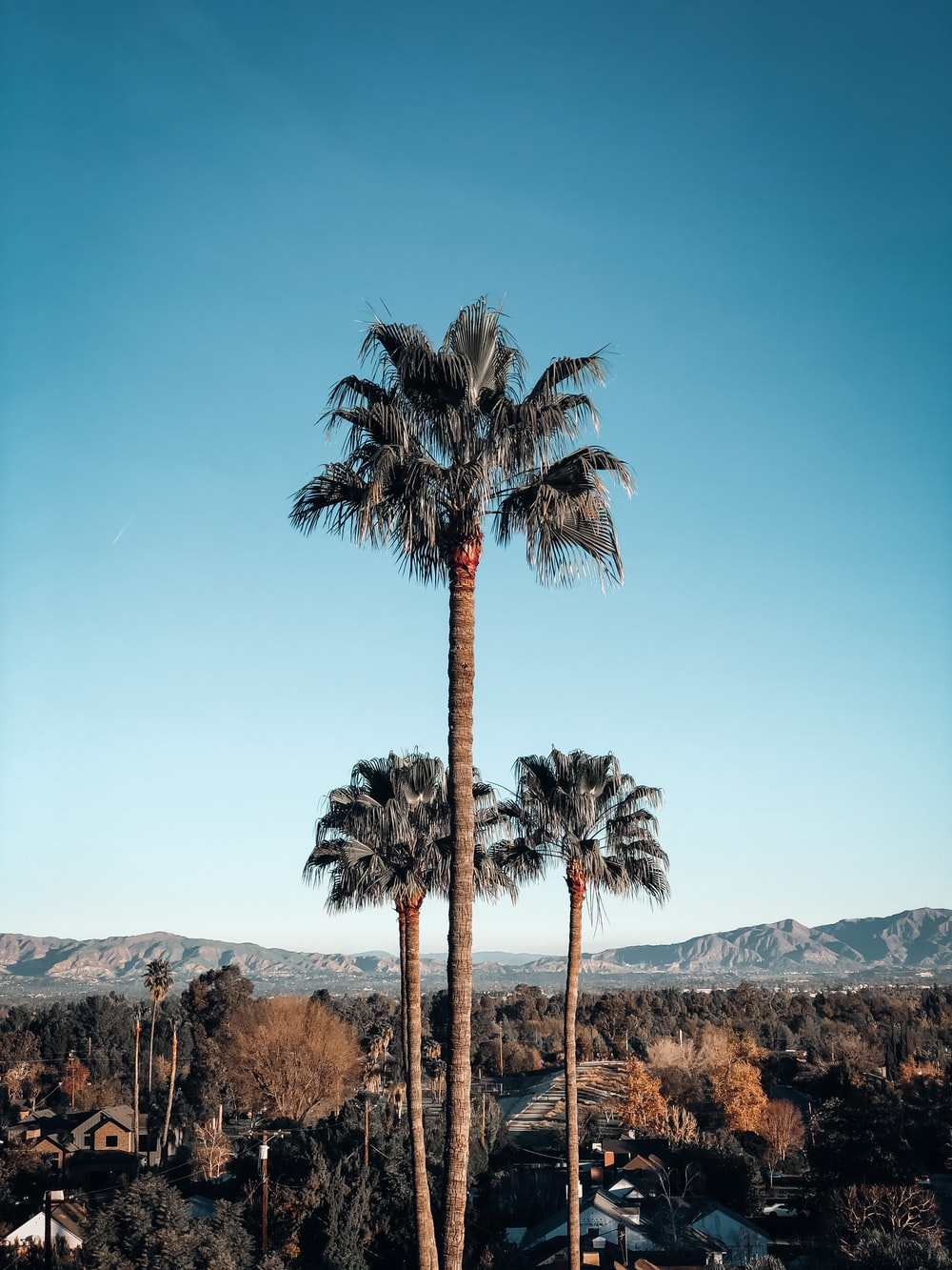 shallow focus photo of palm trees during daytime