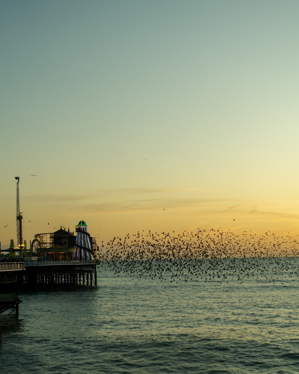 time-lapse photography of flock of birds flying above the sea