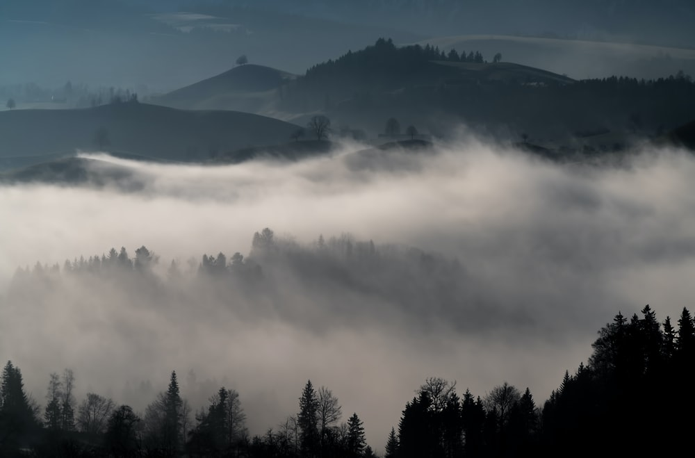 fogs in forest