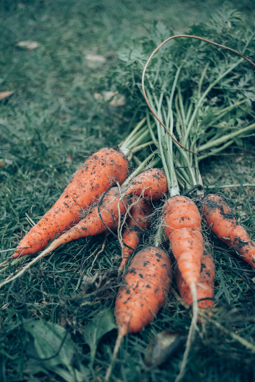 carrots on green grass