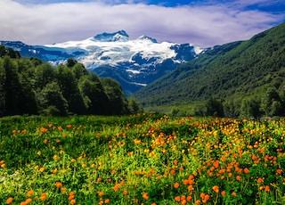 bed of flowers overlooking mountain range