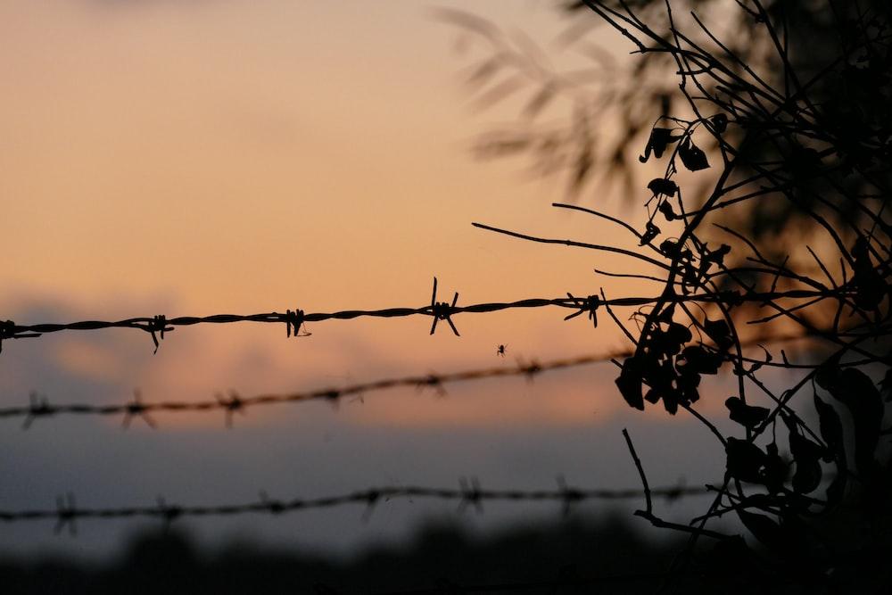 bob wire fence