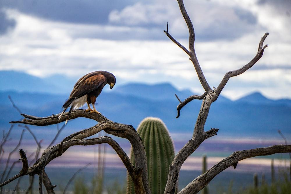 brown and black hawk on tree