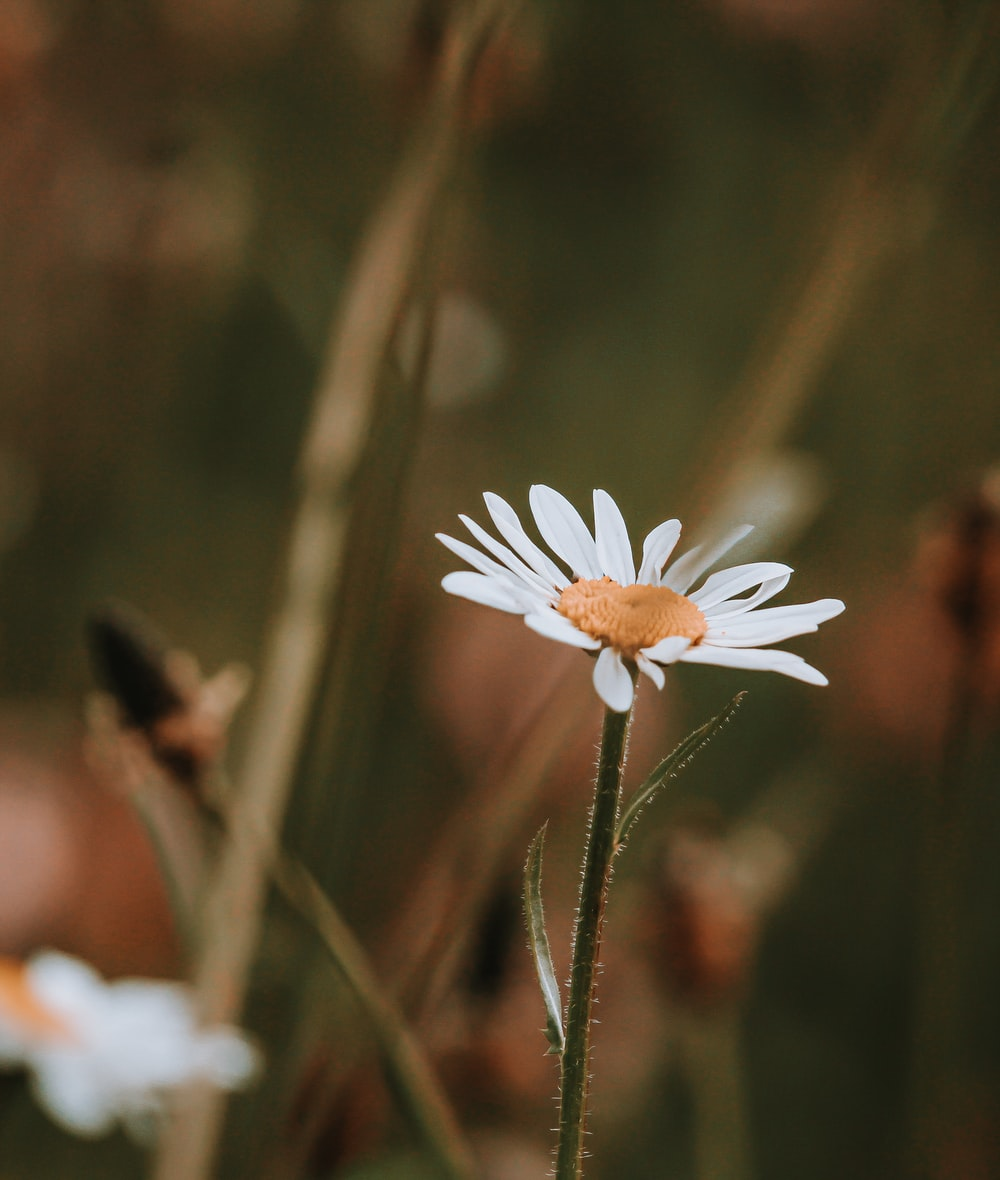 selective focus photography of white daisy during daytime