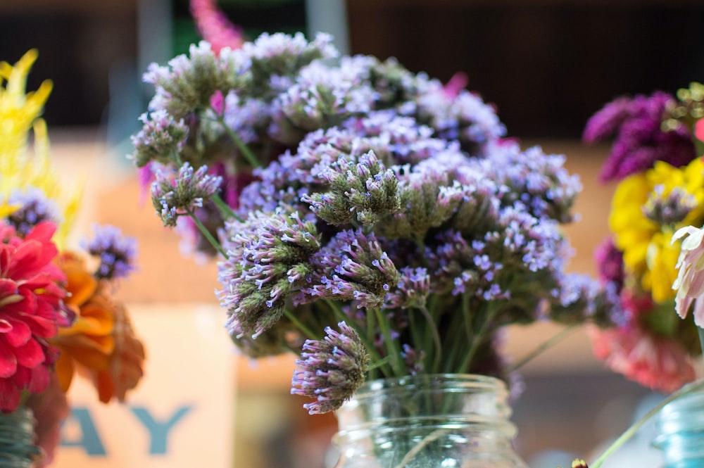 selective focus photography of jar of purple-petaled flower