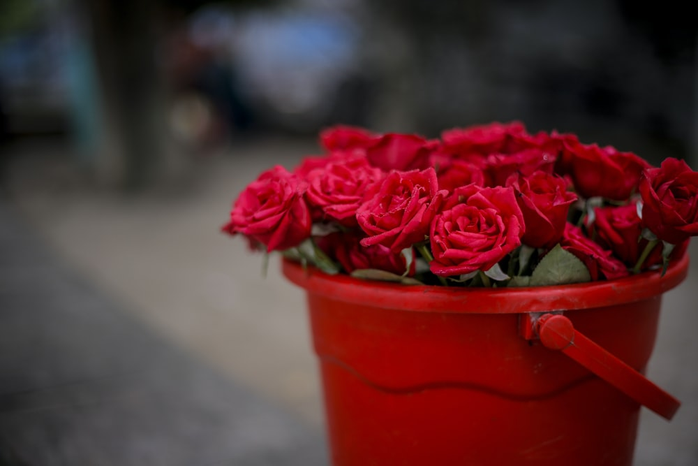 pail of red roses