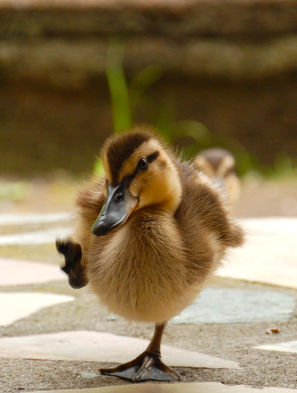 yellow and brown duckling