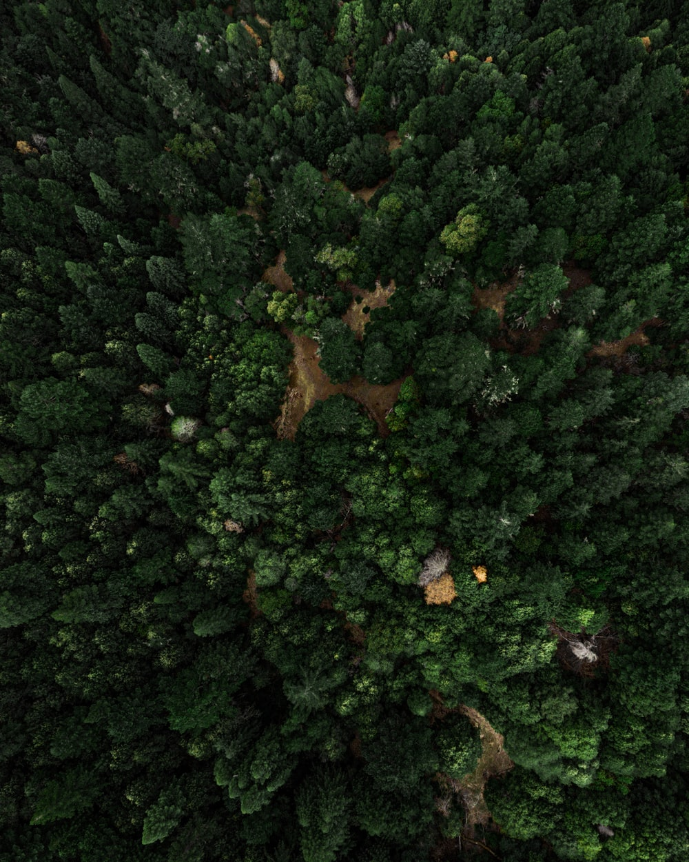 forest trees photograph